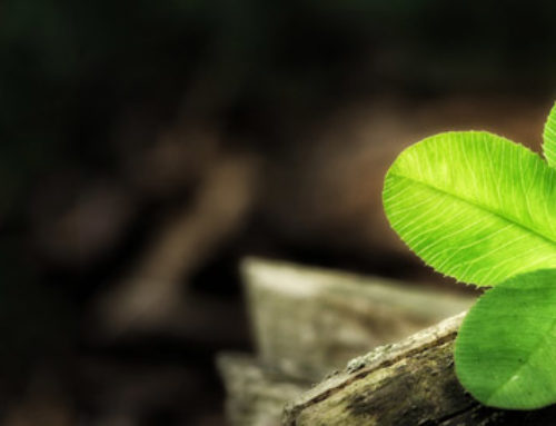 Supernaturally Speaking: Clover Superstitions